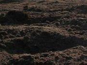 Грунт-плодородный,  чернозем в мешках,  доставка,  грузчики