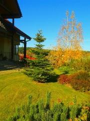 Ландшафтное проектирование,  озеленение и благоустройство